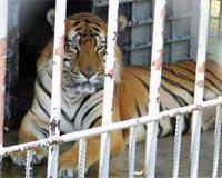 Photo credit:  Animal Legal Defense Fund