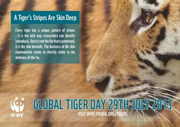 tiger day wwf