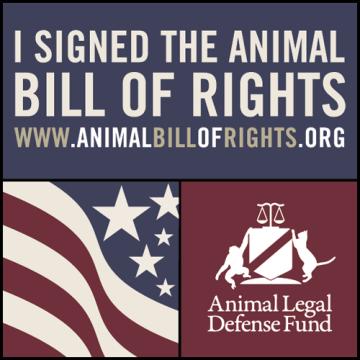 Animal Rights Bill