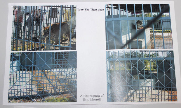 Photos of Tony the tiger in his cage (above) at the Tiger Truck Stop in Grosse Tete, Louisiana, were handed out to lawmakers on the Louisiana Senate floor, along photos of the habitat of LSU's Mike the Tiger, (below) for comparison. Sen. J.P. Morrell, D-New Orleans, distributed the photos in opposiion of a bill to allow the tiger's owner to keep him there. (Emily Lane, NOLA.com | The Times-Picayune)