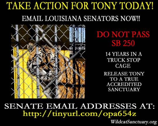 Graphic Courtesy of Wildcat Sanctuary / Photo of Tony Courtesy @PuppyProtector1