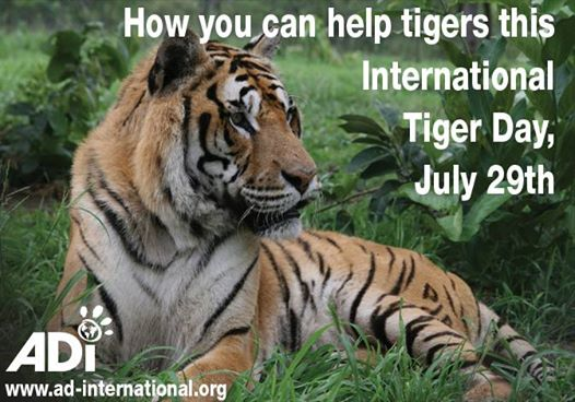 Please click picture for ways to help tigers! Courtesy of Animal Defenders International