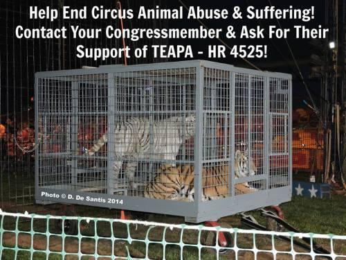 teapa tigers
