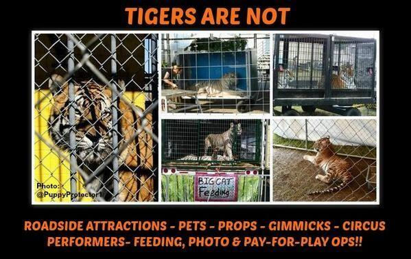 tigers are not