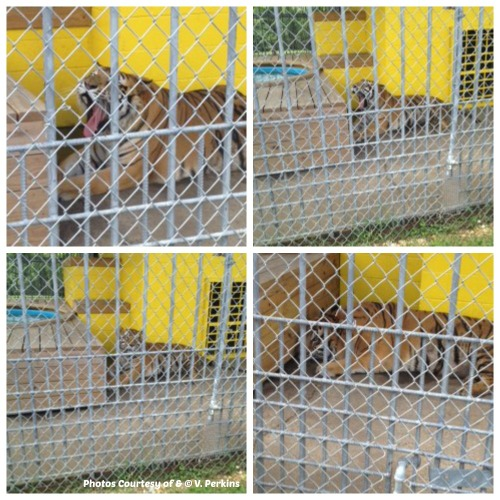 If you visit Tony please share your pictures with us. Email roar4tony@yahoo.com. Thanks V. Perkins for these pictures taken June 2014.