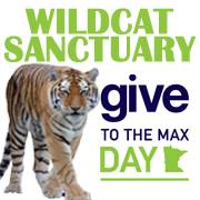 Click here and support the cats of Wildcat Sanctuary!