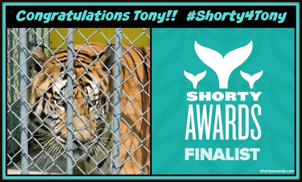 Big Cat Rescue of Tampa Florida | Free Tony The Tiger
